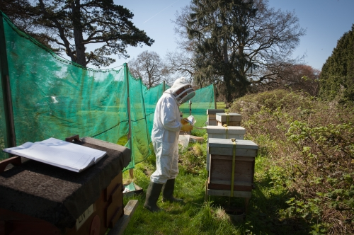 Leigh Court bees